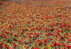 wild-tulip-gardens-2.jpg