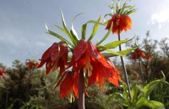 wild-tulip-gardens-4.jpg