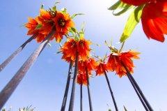 wild-tulip-gardens-5.jpg